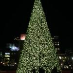 SF Tree